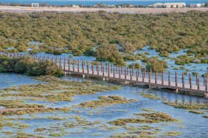 Mangrovenwälder von Al Khor